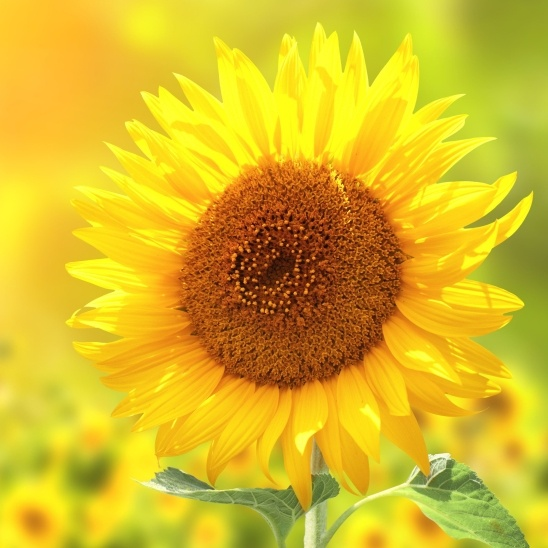 sunray_inspiration_thumb